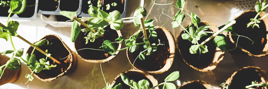 When should I plant a roof garden?